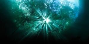SetRatioSize800700-mangrove-shimmer-2
